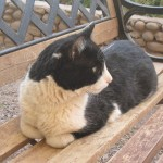 Our hostal cat, looked a little like my former cat Fischer - and was as stubborn as he was - but cute!