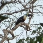 A Toucan!!!!!!!!!!!!!! I was very happy to see it...