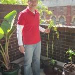 Avocado tree - still alive ;-)