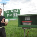 Free range eggs to sell - huge ones and small ones...