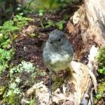 Nice little bird with long legs - Fränky, is it you??