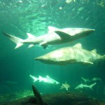 Underwater in the shark tank...