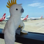 Strange birds...inside and outside the airport building in Sydney ;-)