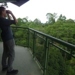 View from a canopy tower over the rainforest in Sepilok