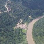 Initial stage of destruction - logging of the best/ oldest/ biggest trees