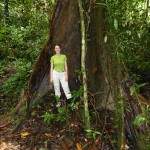 Here we found some remaining huge trees