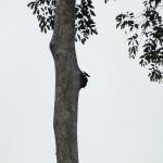 Parrots nesting above the Orang-Utan area