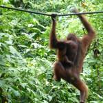 Hitchhiking Borneo style