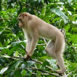 Envy views from the side line by other monkeys