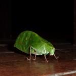 Mr. Leaf...
