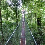 Narrow bridge high up in the trees