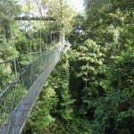 Canopy walk including a river crossing