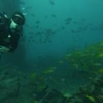 Diving beneeth a former oil platform
