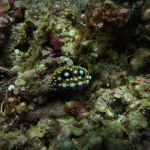 Another nudi