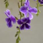 Blumen im Guesthouse Garten