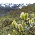 Hay fever plants