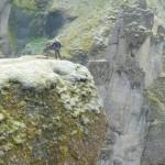 Okay, that's a drop-off at Fjadrargljufur canyon